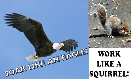 Soar Like An Eagle, Work Like A Squirrel