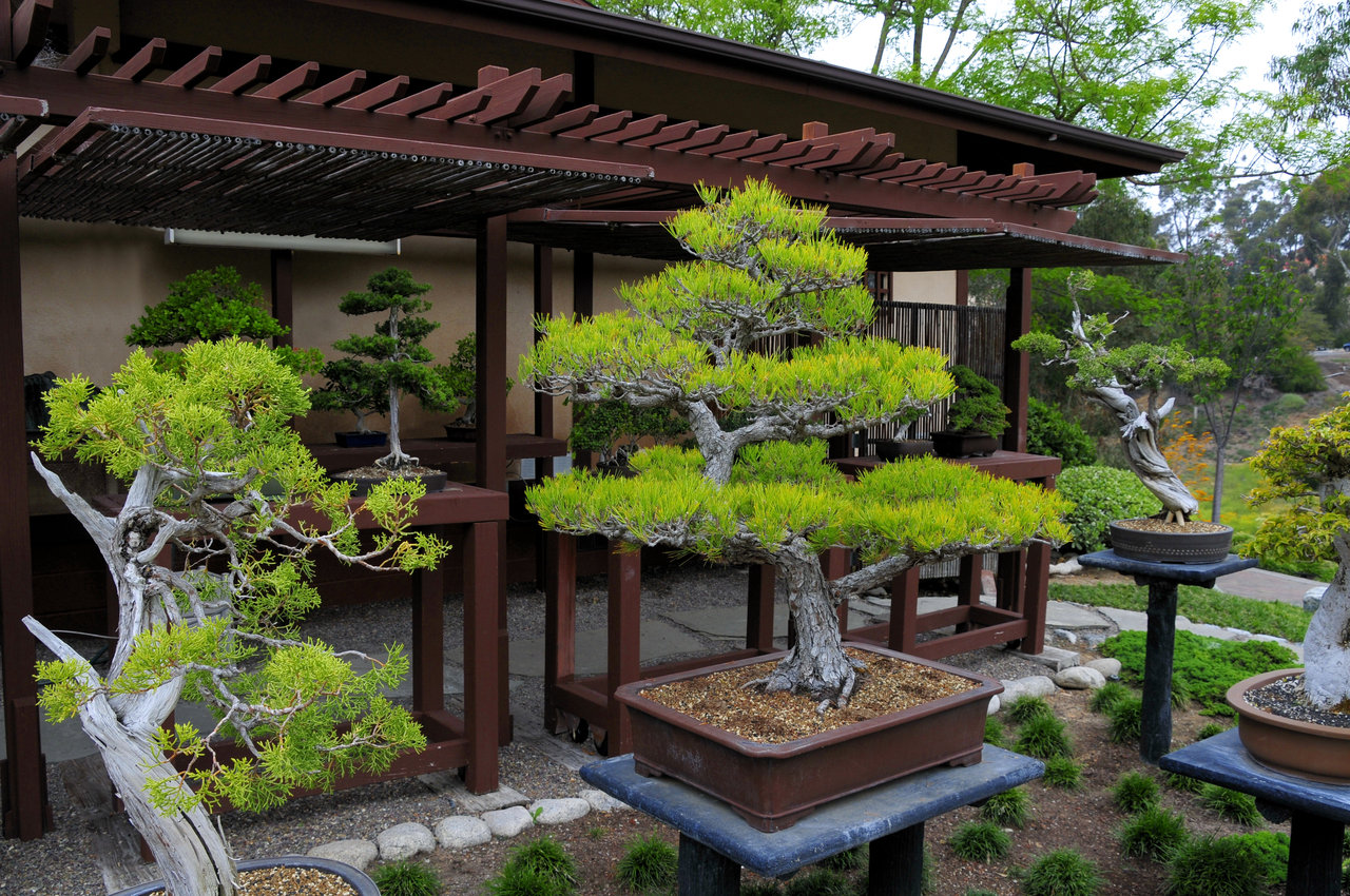 Life Lessons of the Bonsai Tree | Thoughts from Bob Choat....