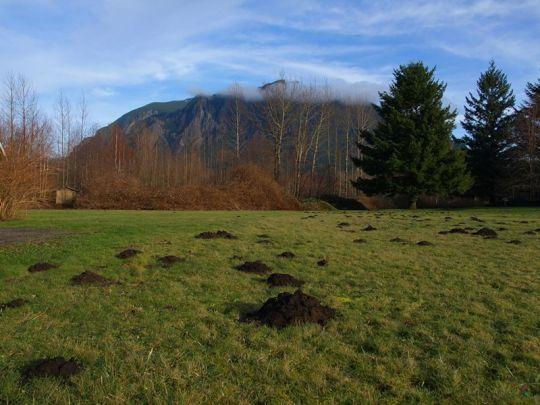 molehills-and-mountain-800
