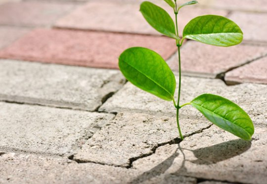 growth-in-adversity